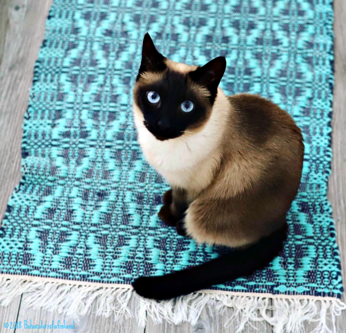 Blue Eyes | Siamese Cat on Blue Rug | Instagram Inspiration That Stopped My Scroll | www.sandykayemoss.com