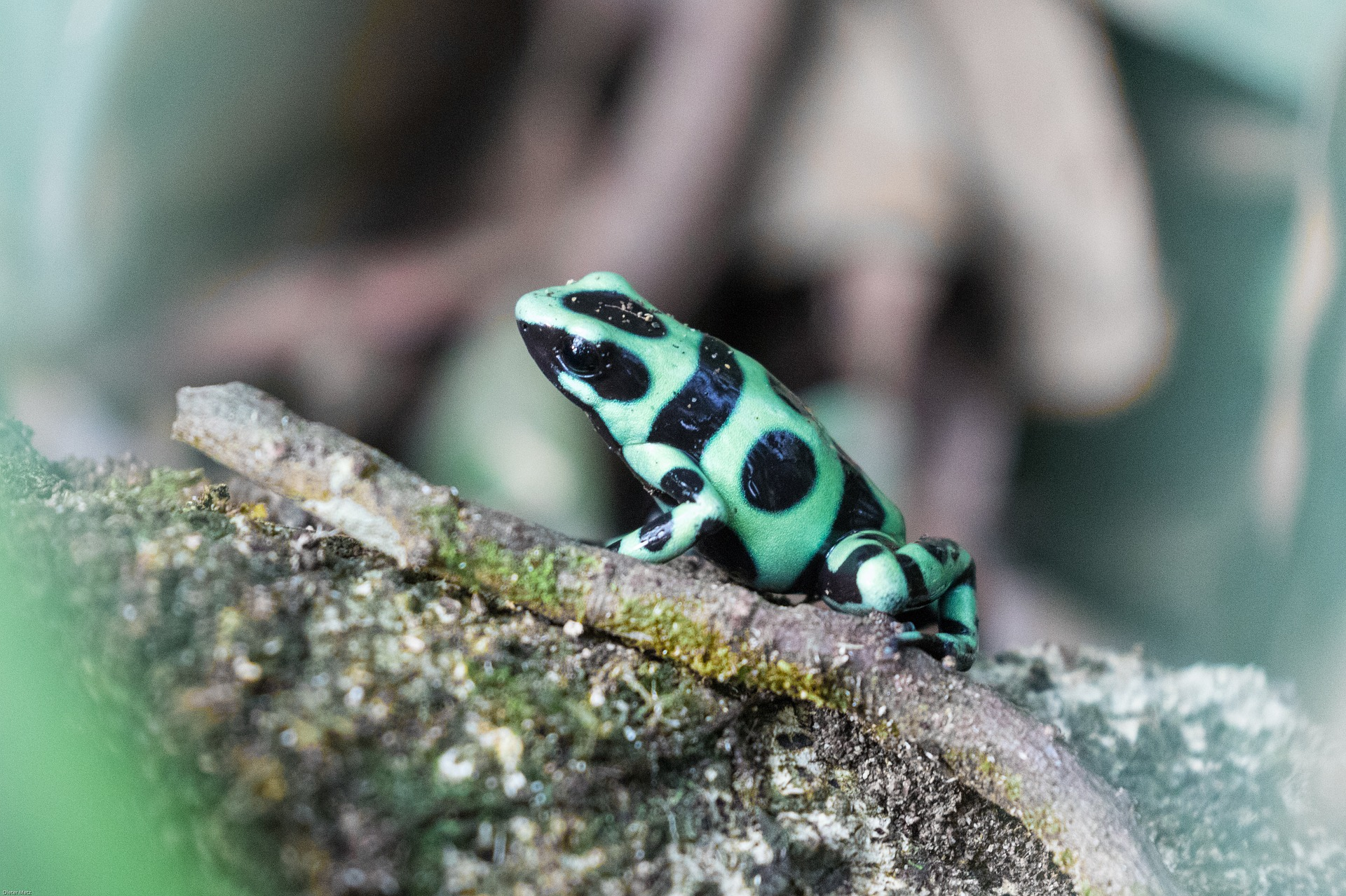 Color keeps Dart Frogs Safe | 5 ways color is used in our lives | Purpose of Color in our lives